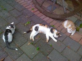 Our three cats -Lazy in the hot summer xD by Shiako-sama