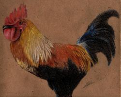 rooster by trececielos