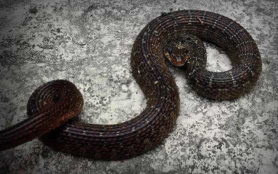 Blotched Water Snake by 3Scar