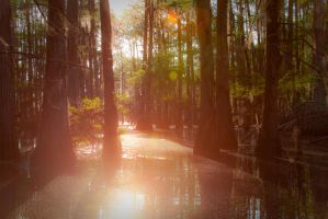 Swamp Mirror by CHabio