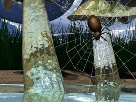spider wed by dandolby