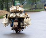Hauling Ducks by BertLePhoto