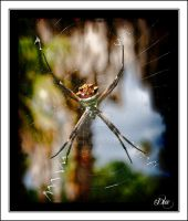 The Itsy Bitsy Spider by DleeKirby