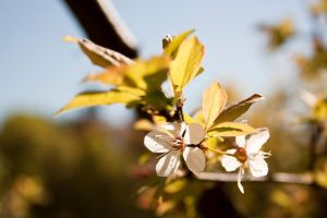 Blossoming tree #3 by theartofmike