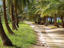 Coconut pathway. by peterpateman