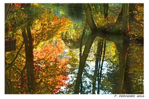 vincennes wood by bracketting94