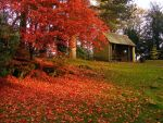 Autumn Shelter by Softspoken-One