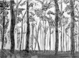 Charcoal trees by RyanBraich