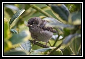 Baby Sparrow by 001mark