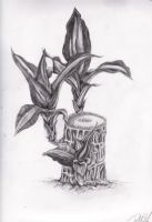 This is a plant. by zhoumlh