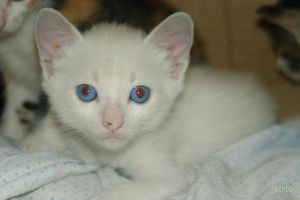 white cat by emilie-cat