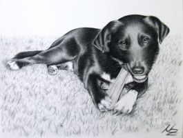 Labrador Mix Samy by ArtsandDogs