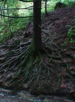Roots 3 by Marcusstratus