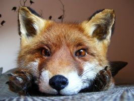 Red fox softmount by DeerfishTaxidermy