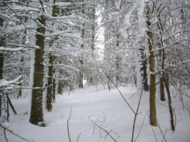 winter forest stock 2 by HumbleBeez