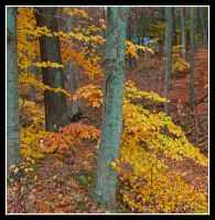 Fall forest, cropped.framed. by harrietsfriend