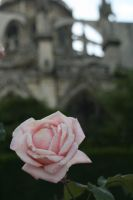 Behind the Notre-Dame by sleeponground