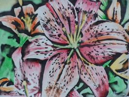 Speckled Pink Lily by melissaleahmp