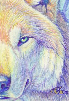 'Burning Cold' - ACEO by Goldenwolf