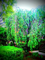 Willow tree by xogirlxo78