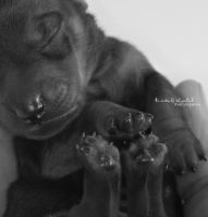 . PAWS . by KimberleePhotography