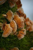 Fungus stock by rustymermaid-stock