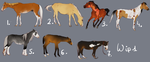 WARNING: REALISTIC RESCUE ADOPTABLES - wip1 by BH-Stables