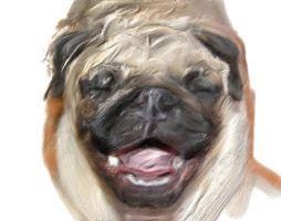 Laughing pug by Harmony-Designs