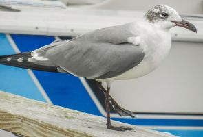 Seagull 2 by BlueMoon30