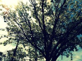 Tree of life. by Amour-de-Dante