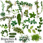 Branches and leaves resource by Rain-Gear