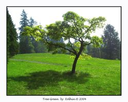 Very Green Tree 217 by Eolhin