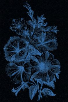 blue flowers by starl3ux