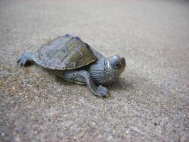 Map Turtle 2 by Kawaii--Koneko