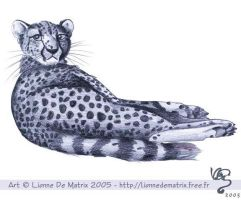 Cheetah by lionne-de-matrix