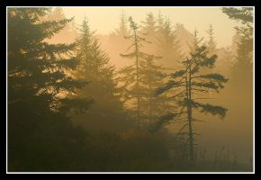 A Light in the Forest by joerossbach