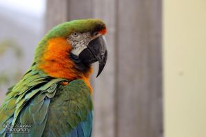 Longleat Parrot by Clerdy