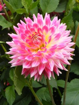 pink n yellow flower 1 by freakystuffstock