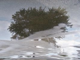 Reflections of a tree by paintresseye