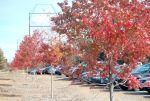 Fall Foliage 4 by Endromography