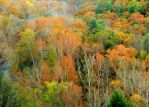 Shades of Autumn 2014.XVIII by MadGardens
