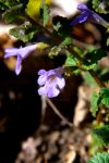 Small Violet Flower by Envy-Graphix