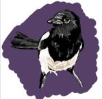 Magpie by ScaryGorbash