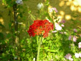 Stock: Flower 2 by Ireth-stock