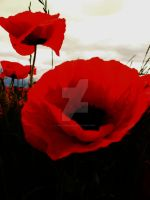Field Poppies 6 by melrissbrook