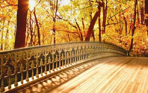 Forest with Bridge by marcielucas