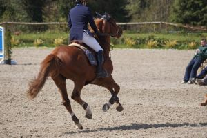 Chestnut Horse - Show Jumping stock - 11.12 by MagicLecktra