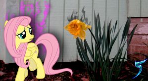 Fluttershy... Whats wrong flower? by TabbyDerp