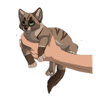 cat adoptable 13 -CLOSED- by Black-pond-adopts