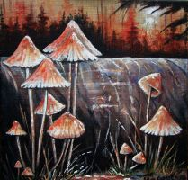Mycena specie by dutchway